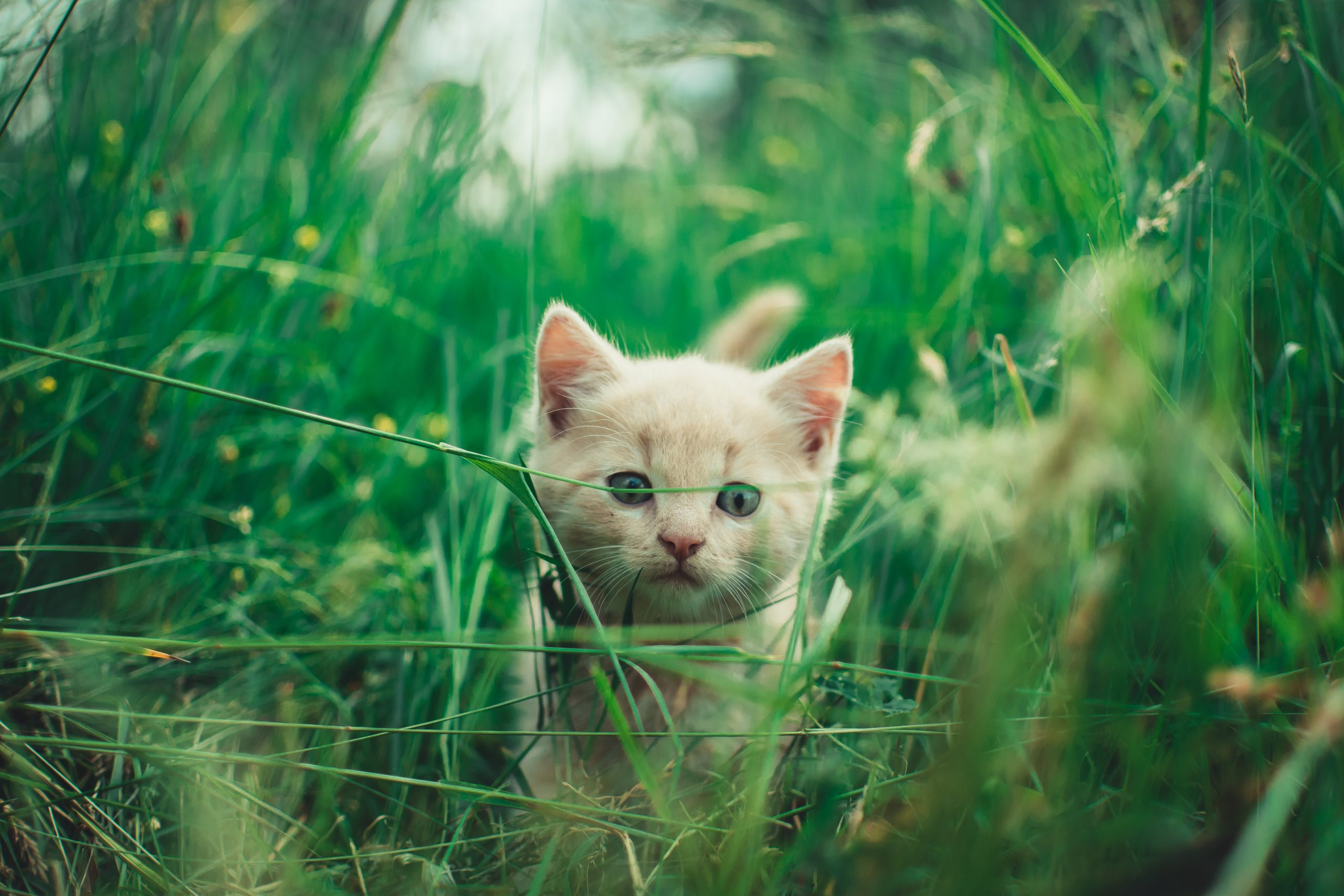 selective focus photography of cat on green plants